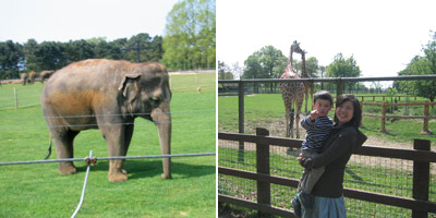 whipsnade_zoo.jpg